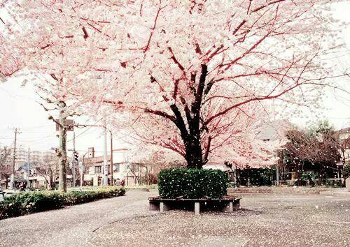 Kiss Under The Cherry Blossom Tree Chapter 3 K Pop Amino