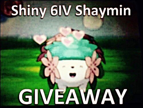 Closedgtsshinyshaymin Giveaway Pokémon Amino