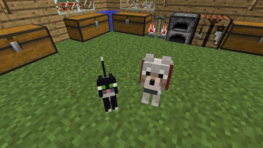 How To Get Cats In Minecraft Xbox