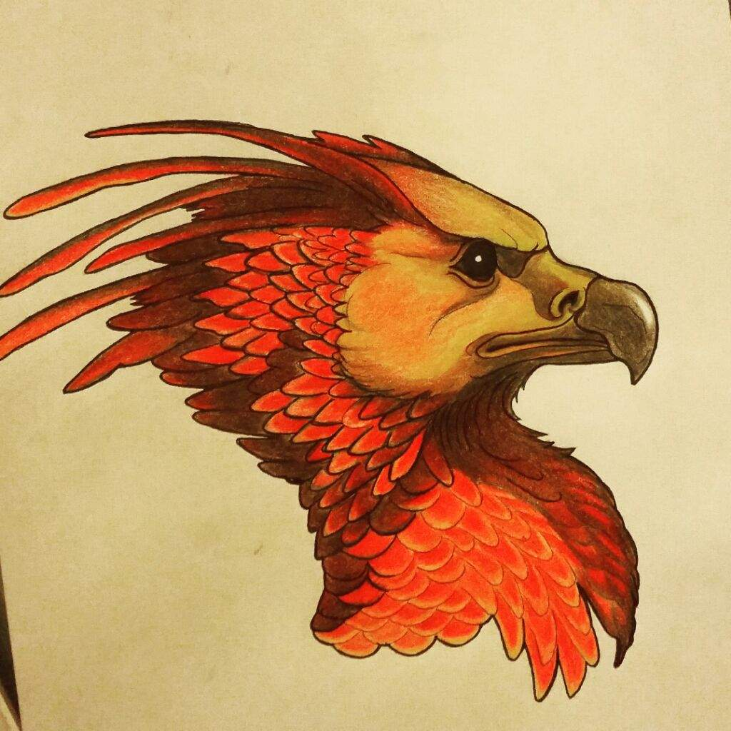 how to draw a phoenix from harry potter