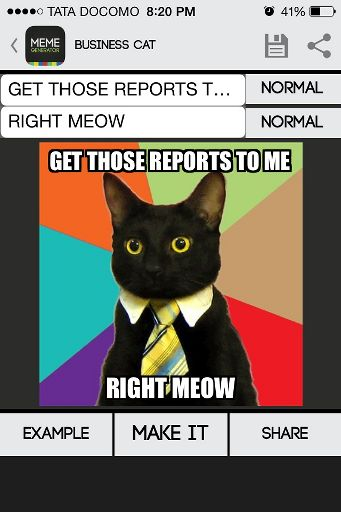 This Office Cat Meme Wiki Omg Amino