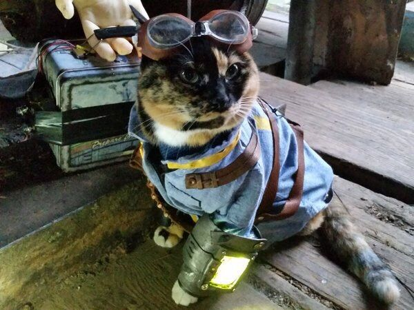 How Do I Get A Cat In Fallout