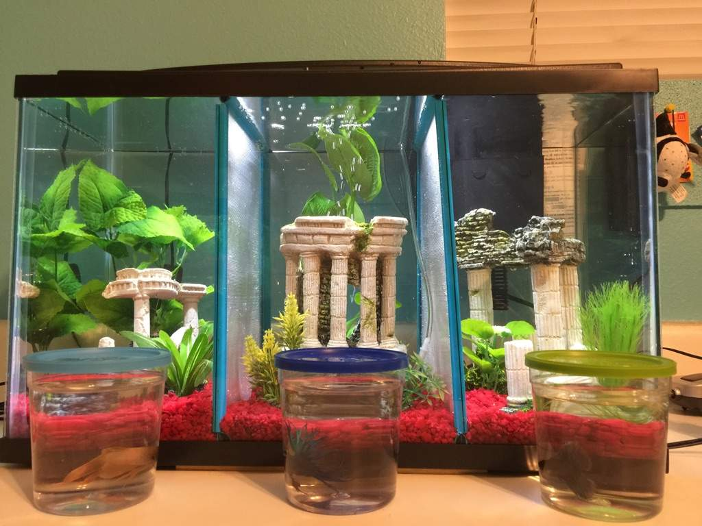 Pets For 10 Gallon Tank : 10 gallon tank!!!!! Pets Amino