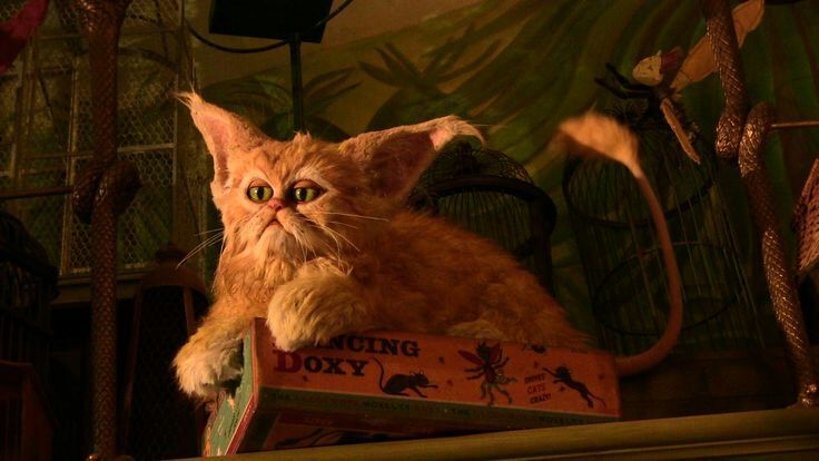 List Of Harry Potter Cat Names
