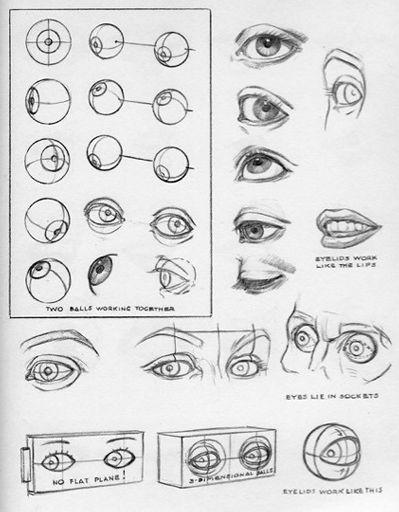 Andrew Loomis | Wiki | Art Amino