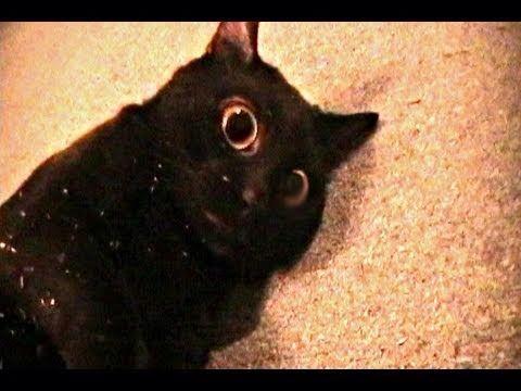 Should My Cat Eat Catnip