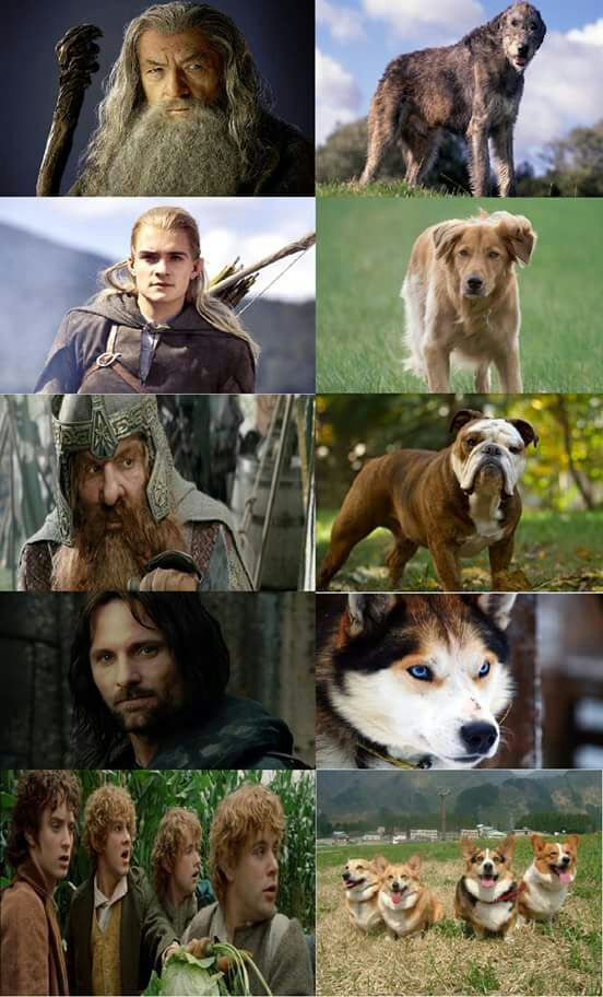 lord of the rings doggies lotr amino