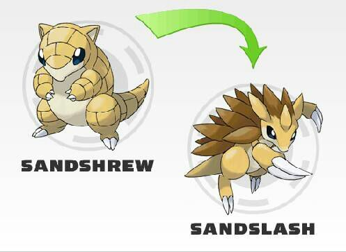Sandshrew & Sandslash | The Elements | Pokémon Amino