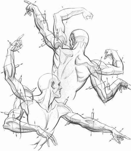 Male Anatomy-Drawing Tutorial | Wiki | Art Amino