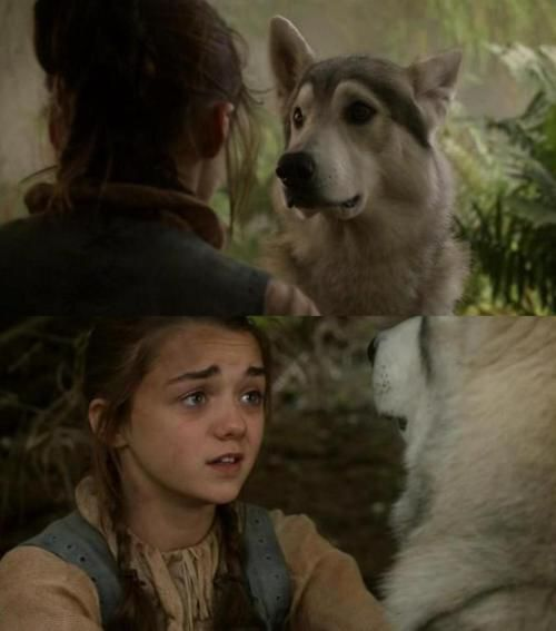 A Lady And Her Dire Wolf: Nymeria (direwolf)