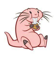 Naked mole rata en vivo