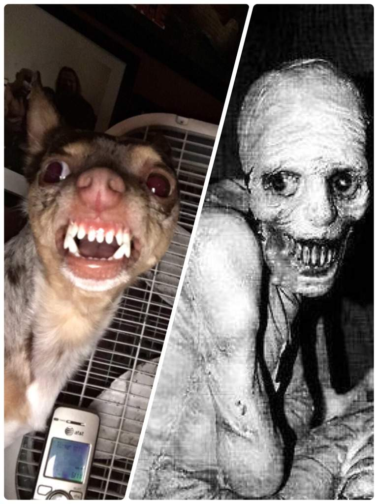 My dog became the russian sleep experiment | Horror Amino