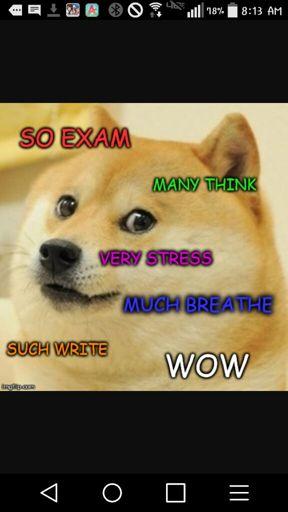 Doge | Wiki | Dank Memes Amino