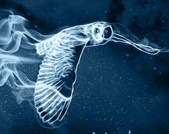 Výsledek obrázku pro patronus owl