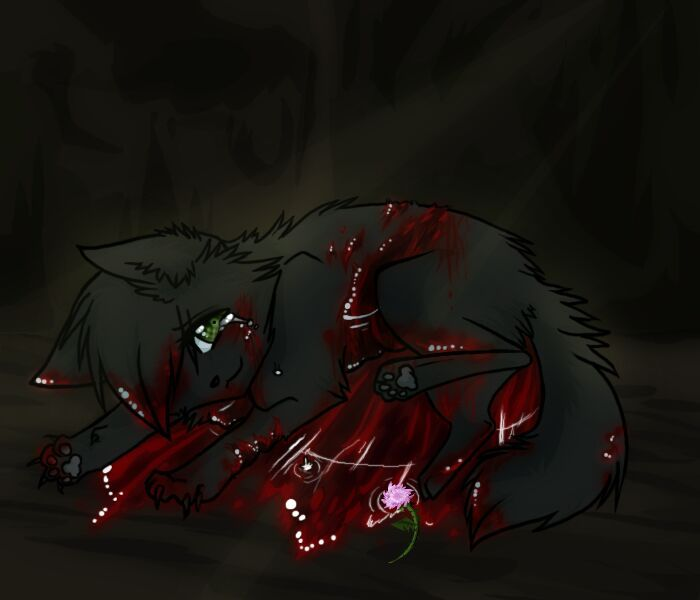 Warrior Cats Dead: Hollyleaf Rant!