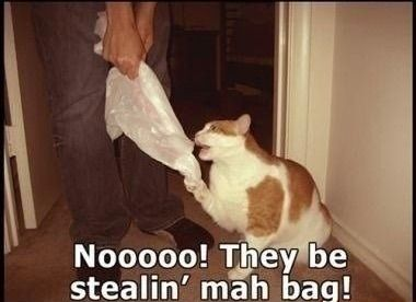 Why do cats lick bags
