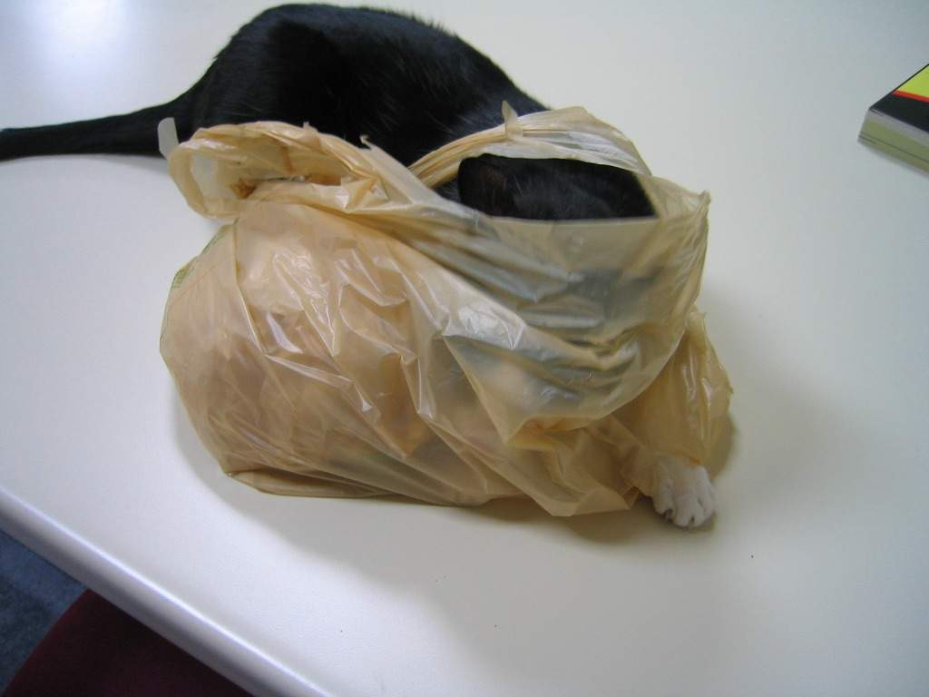 Why Do Cats Lick Plastic Bags 63