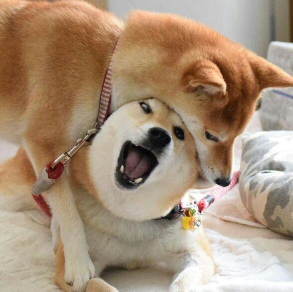 A cute japanese get a creampie mk 8