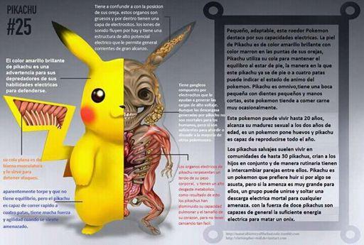 Anatomía de un Pokemon | Pokémon •GO• Amino