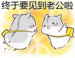 小仓鼠表情包 动漫世界Amino