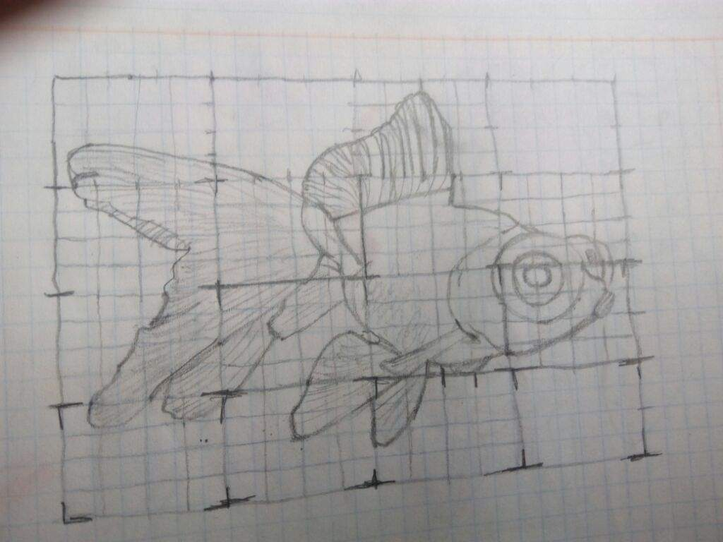 Consejo para aprender a dibujar pecesito  Arte Amino Amino