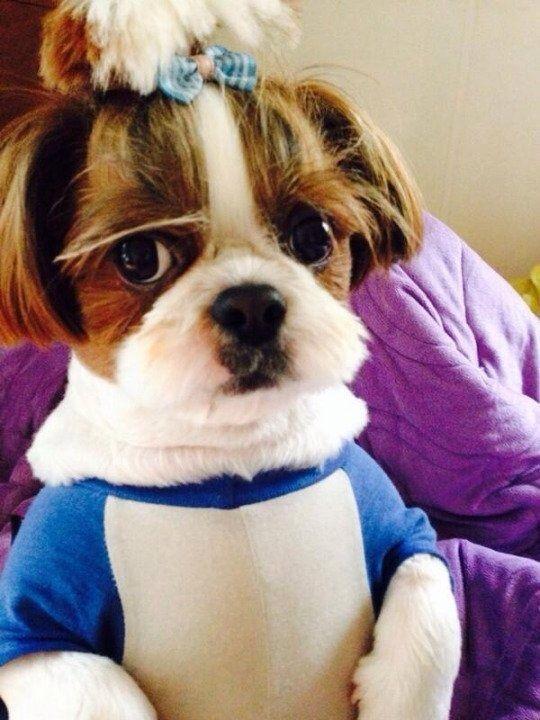 Shinee Key Dog Breed