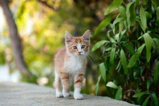 Oc Stories Wiki Warrior Cats Amino Amino
