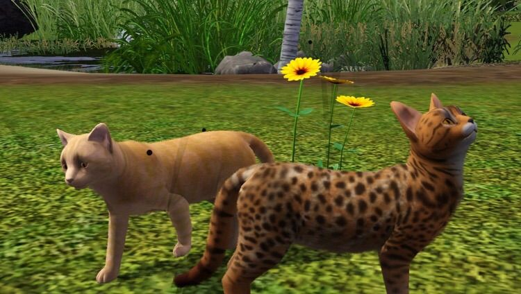 Sims  Warrior Cats Challenge Stories