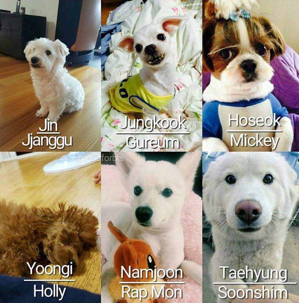 Cloud Names For Dogs