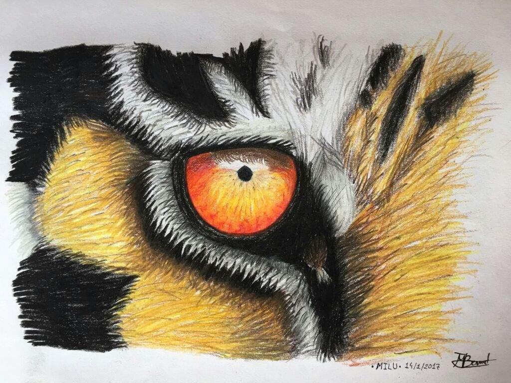 OJO DE TIGRE • Dibujo A Lápices De Colores