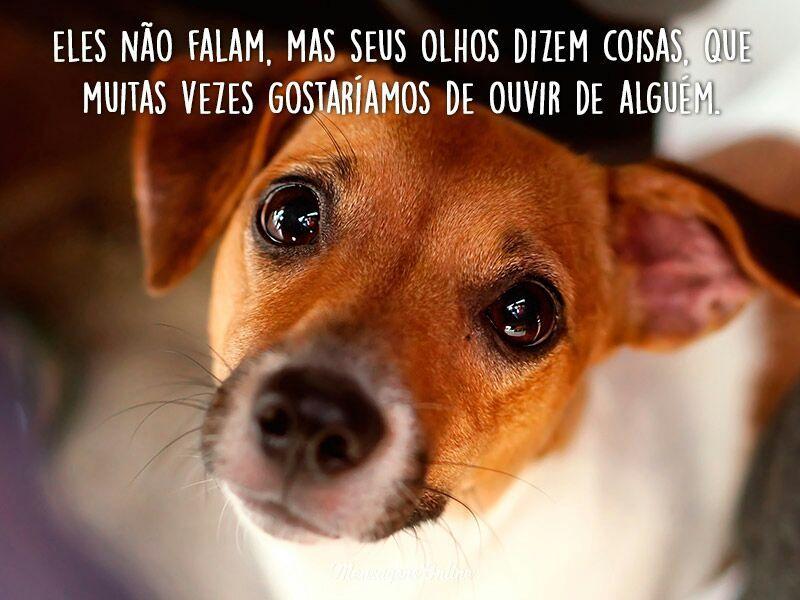Frases Encantadoras Sobre Os Cachorros
