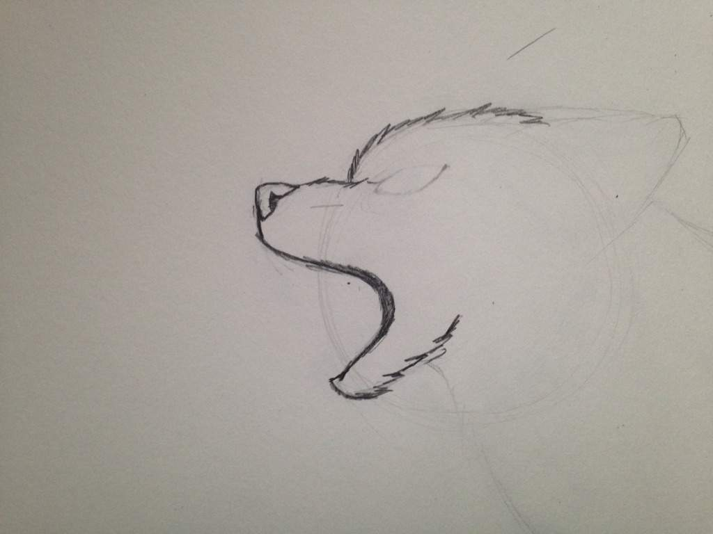 how to draw a snarling cat tutorial part one traditional