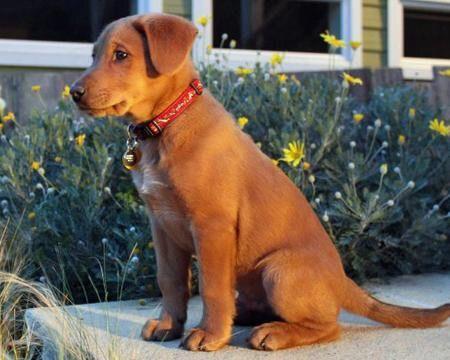 National Puppy Day | Disney Amino
