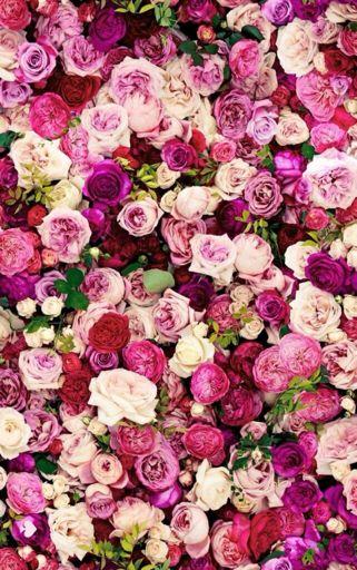 20+ Aesthetic Backround Flowers Background