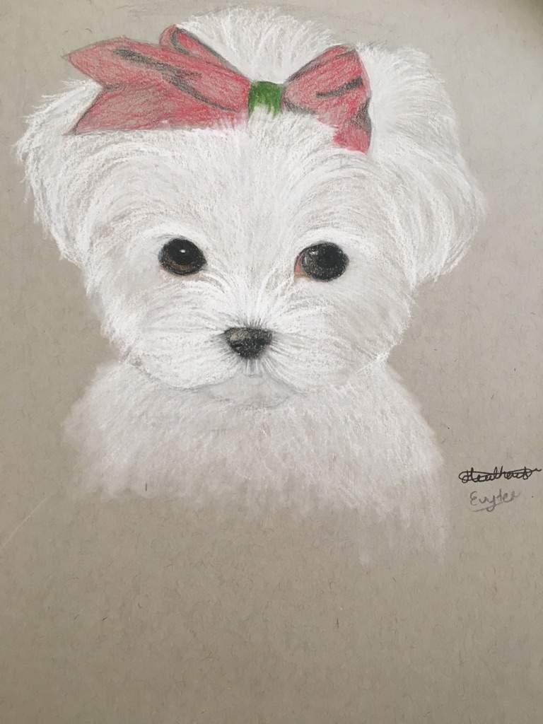 AJ Christmas Doggo Inspired Me to Draw --   AJ Amino Amino