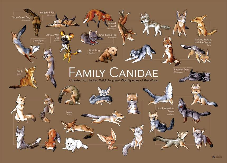 Dog Food Like Canidae