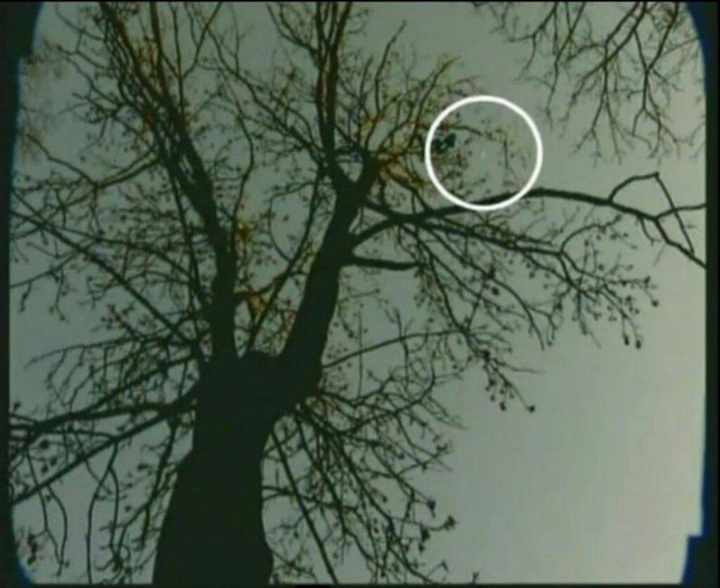 The most haunted ufo hot spot and unexplained forest in for Paranormal activities in the world