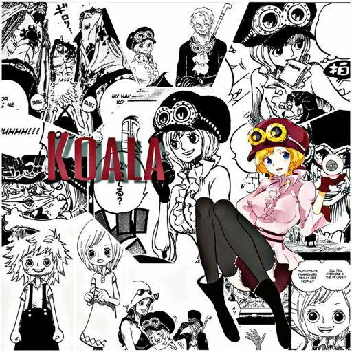 Koala Chibi One Piece Amino