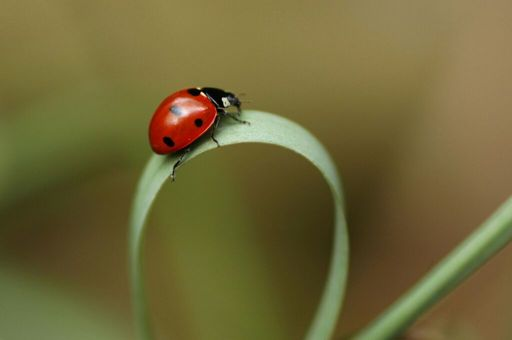 Ladybugs Wiki Pagans Witches Amino