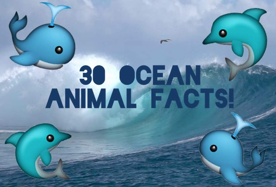 Image of: Amazing Things ocean 30 Facts About Ocean Animals Amino Apps 30 Facts About Ocean Animals Aj Amino Amino