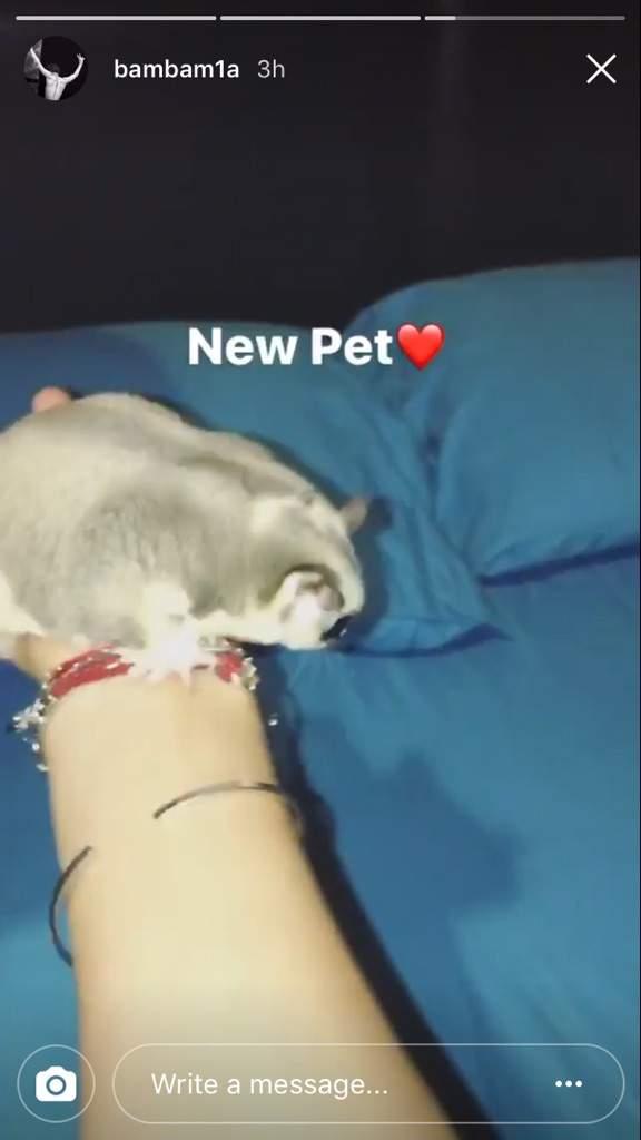 Bambams Cat Name