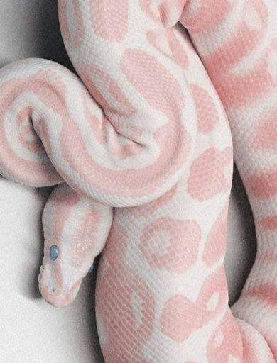 Snake Anatomy & Physiology | Wiki | Herps and Reptiles Amino