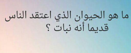 لغز جديد Inazuma Eleven Arabic Amino