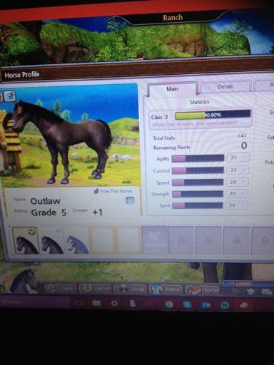 New horse for breeding | Alicia Online | Amino Amino