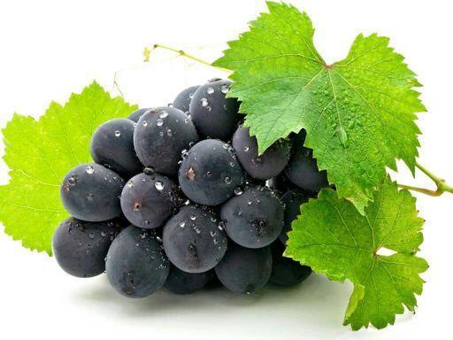 общим в листьях винограда есть ресвератрол работу вахтой проживанием