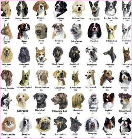 All Dog Breeds Starting With A | Wiki | Animal Roleplay ...