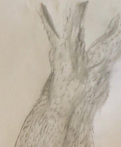 How I Plan To Draw Trees Warriors Amino