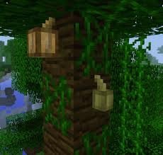 The Cookie Bean Minecraft Amino Cocoa beans are a food ingredient and former dye. the cookie bean minecraft amino