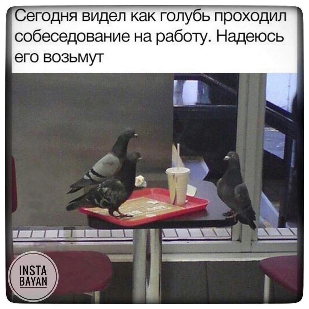 Анекдот Про Голубя