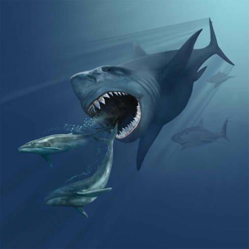 new arrivals eee7e 669ef Megalodon vs Predator X   Prehistoric Paradise✨ Amino